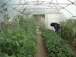 Κήποι - Λαχανόκηποι